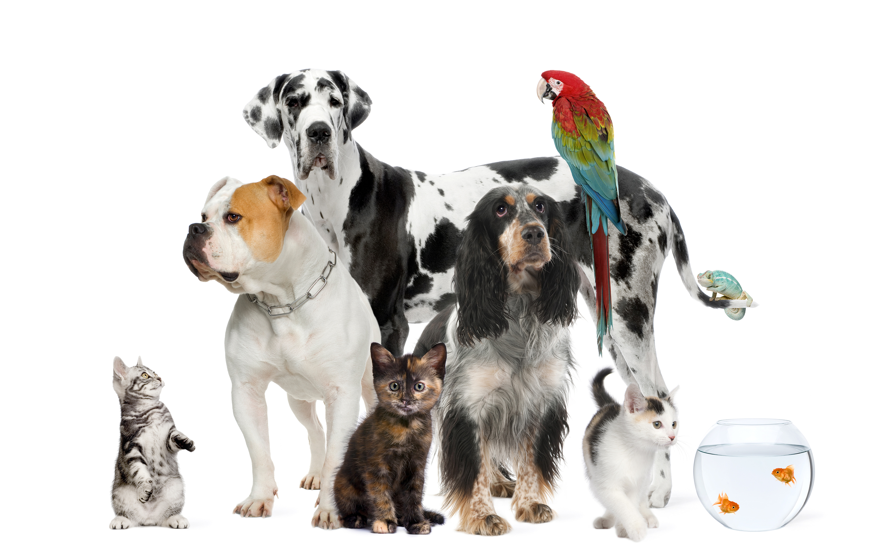 7 Steps to Ensure Proper Care of your Pets in an Emergency
